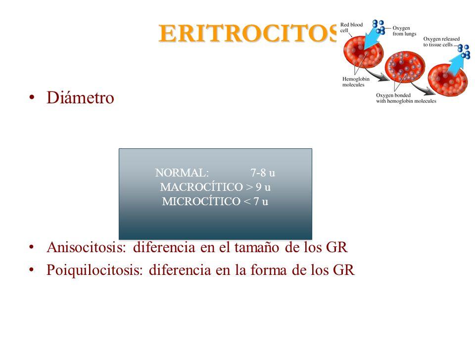 ERITROCITOS Diámetro Anisocitosis: diferencia en el tamaño de los GR Poiquilocitosis: diferencia en la forma de los GR NORMAL:7-8 u MACROCÍTICO > 9 u