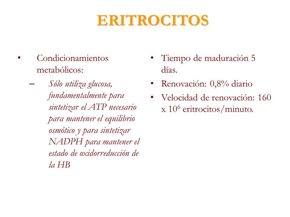ERITROCITOS Condicionamientos metabólicos: – Sólo utiliza glucosa, fundamentalmente para sintetizar el ATP necesario para mantener el equilibrio osmót