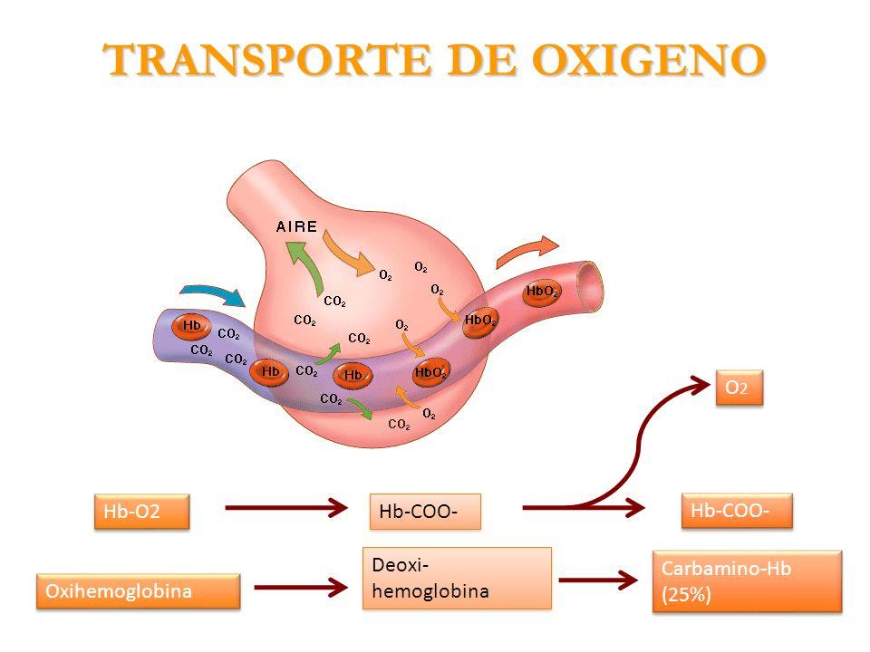 TRANSPORTE DE OXIGENO Hb-COO- Hb-O2 Oxihemoglobina Deoxi- hemoglobina Carbamino-Hb (25%) O2O2 O2O2