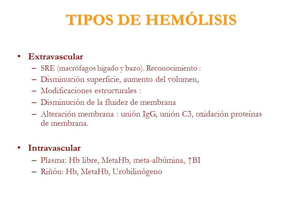 TIPOS DE HEMÓLISIS Extravascular – SRE (macrófagos hígado y bazo). Reconocimiento : – Disminución superficie, aumento del volumen, – Modificaciones es