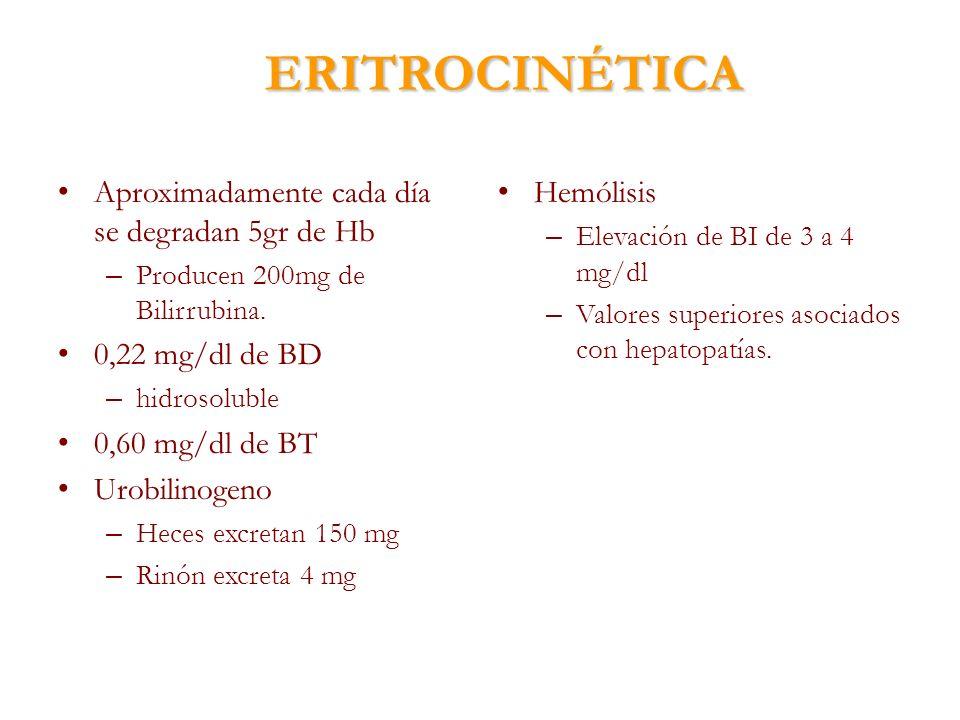 ERITROCINÉTICA Aproximadamente cada día se degradan 5gr de Hb – Producen 200mg de Bilirrubina. 0,22 mg/dl de BD – hidrosoluble 0,60 mg/dl de BT Urobil