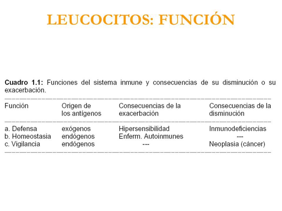 LEUCOCITOS: FUNCIÓN