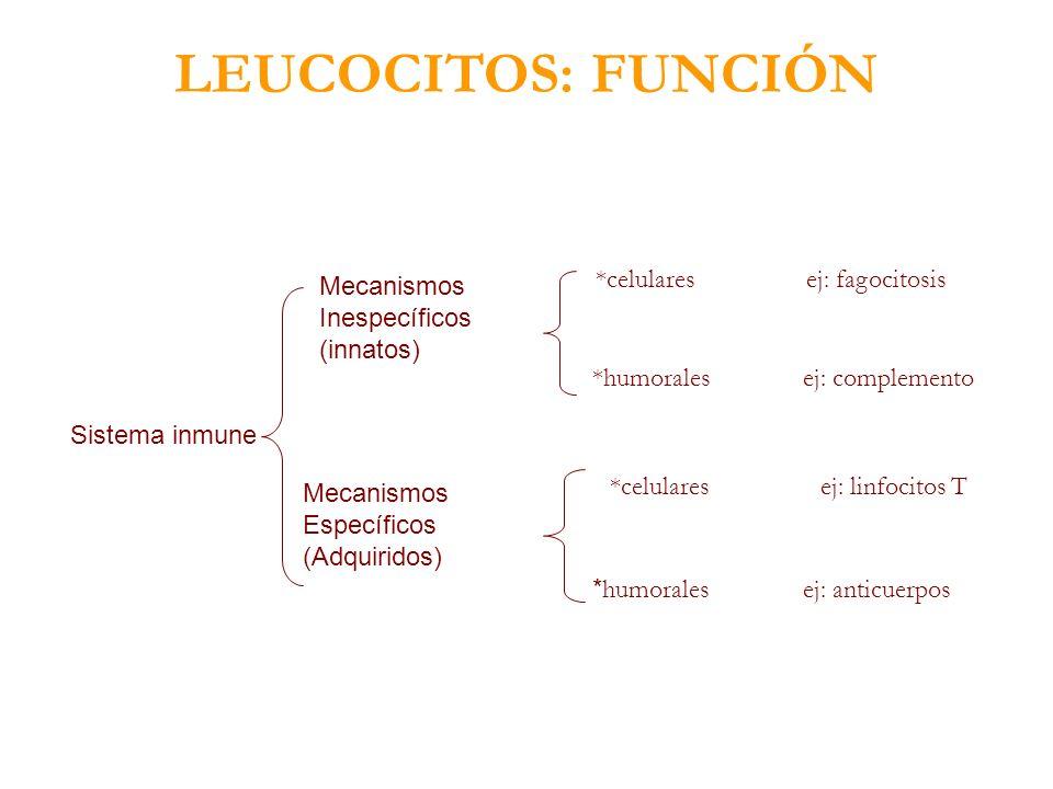 Sistema inmune Mecanismos Inespecíficos (innatos) Mecanismos Específicos (Adquiridos) *celularesej: fagocitosis *humoralesej: complemento *celularesej