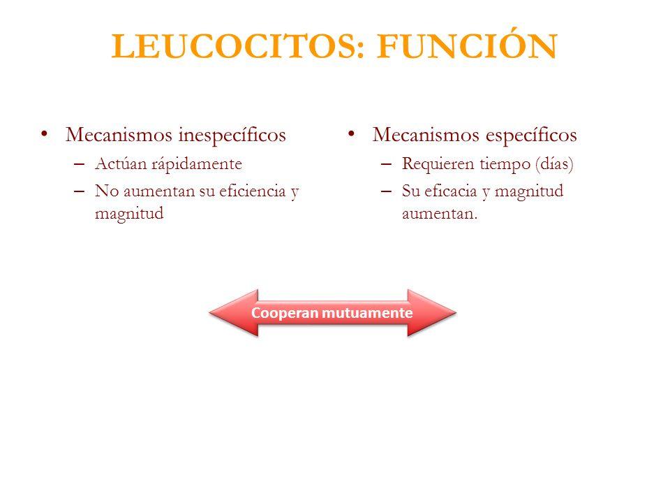 LEUCOCITOS: FUNCIÓN Mecanismos inespecíficos – Actúan rápidamente – No aumentan su eficiencia y magnitud Mecanismos específicos – Requieren tiempo (dí