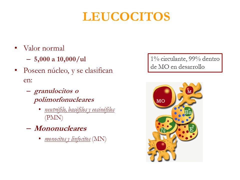 LEUCOCITOS Valor normal – 5,000 a 10,000/ul Poseen núcleo, y se clasifican en: – granulocitos o polimorfonucleares neutrófilo, basófilos y eosinófilos