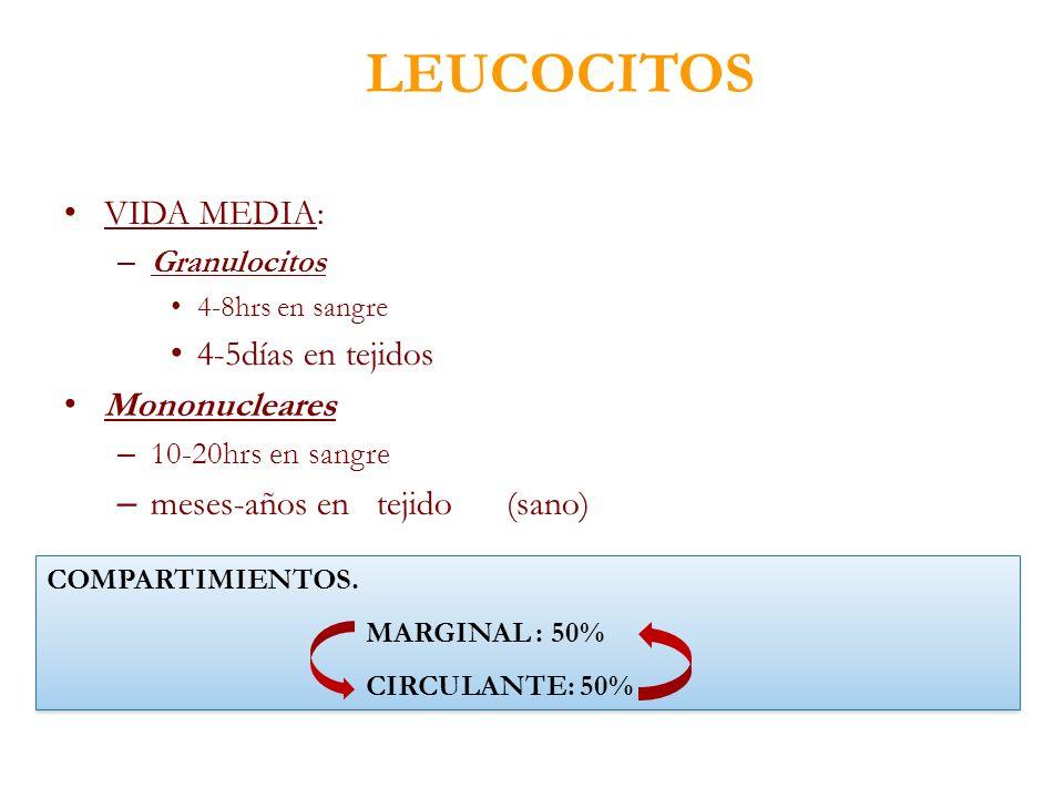 LEUCOCITOS VIDA MEDIA: – Granulocitos 4-8hrs en sangre 4-5días en tejidos Mononucleares – 10-20hrs en sangre – meses-años en tejido (sano) COMPARTIMIE