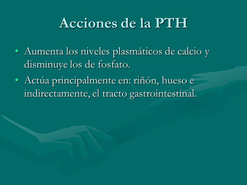 Acciones de la PTH Aumenta los niveles plasmáticos de calcio y disminuye los de fosfato.Aumenta los niveles plasmáticos de calcio y disminuye los de f