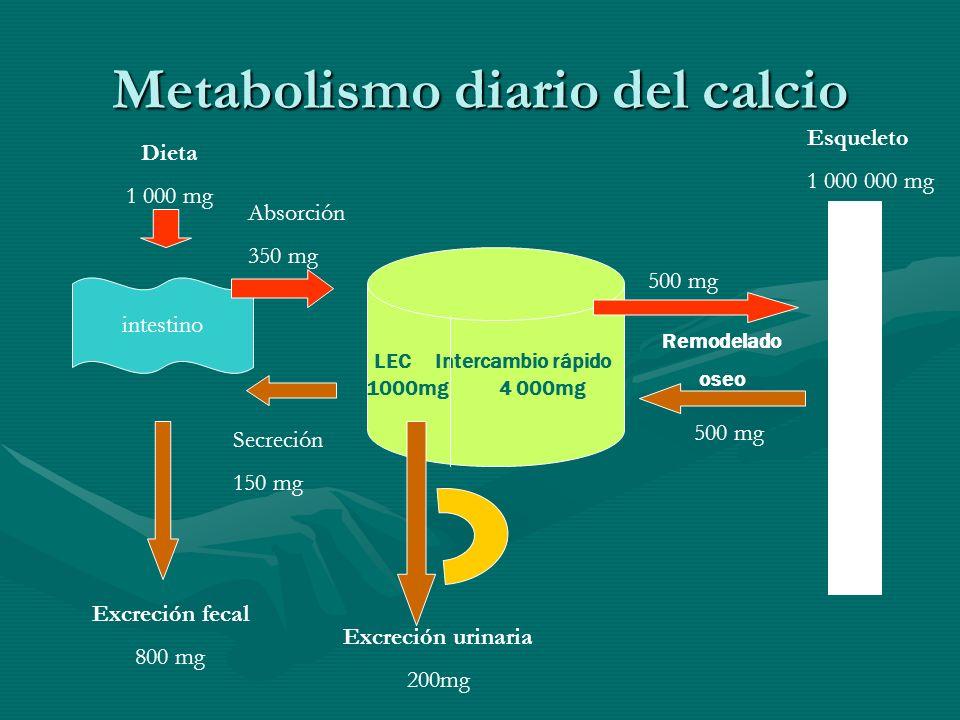 Metabolismo diario del calcio intestino Dieta 1 000 mg Excreción fecal 800 mg LEC Intercambio rápido 1000mg 4 000mg Secreción 150 mg Absorción 350 mg