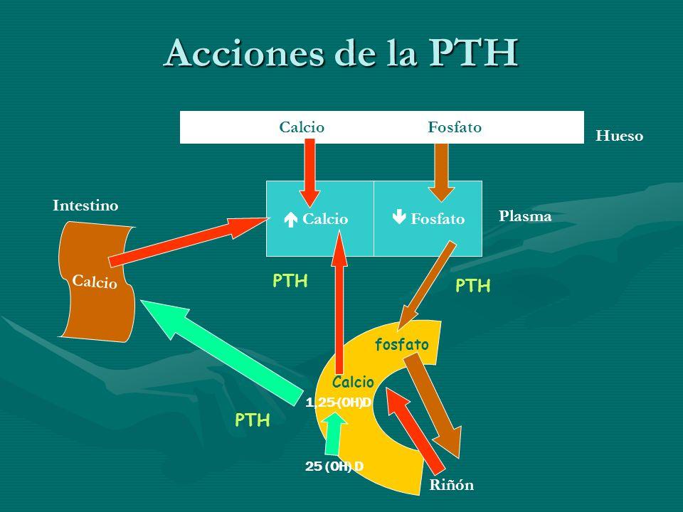 Acciones de la PTH Calcio Fosfato Calcio Plasma Hueso Intestino Riñón PTH Calcio fosfato 25 (OH) D 1,25-(OH)D
