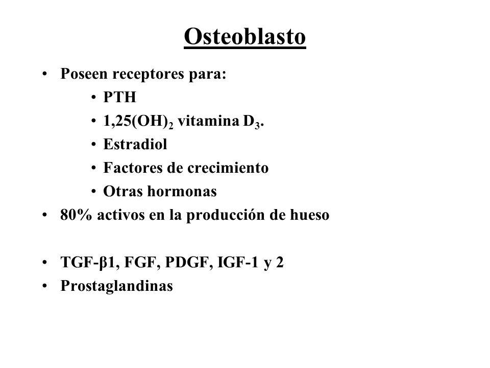 Osteoblasto Poseen receptores para: PTH 1,25(OH) 2 vitamina D 3. Estradiol Factores de crecimiento Otras hormonas 80% activos en la producción de hues