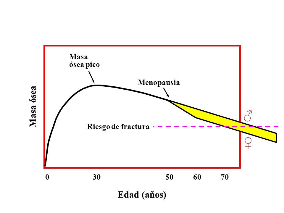 Edad (años) 0 30 50 60 70 Menopausia Masa ósea pico Masa ósea Riesgo de fractura
