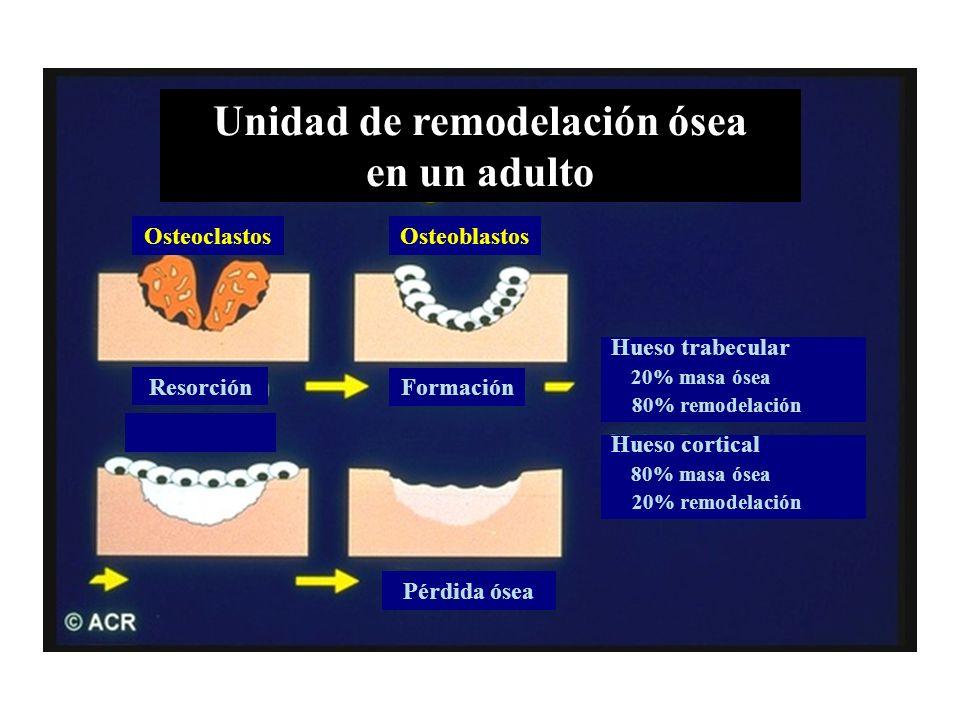 Unidad de remodelación ósea en un adulto OsteoclastosOsteoblastos Resorción Formación Pérdida ósea Hueso cortical 80% masa ósea 20% remodelación Hueso