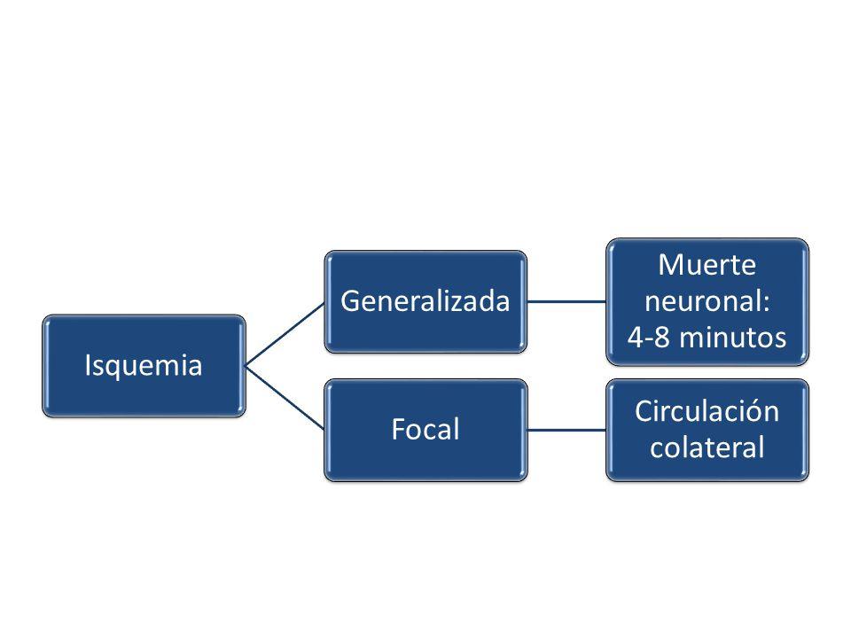 IsquemiaGeneralizada Muerte neuronal: 4-8 minutos Focal Circulación colateral