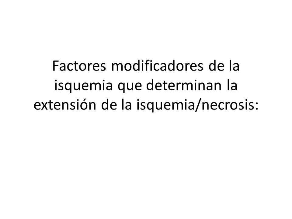 Factores modificadores de la isquemia que determinan la extensión de la isquemia/necrosis: