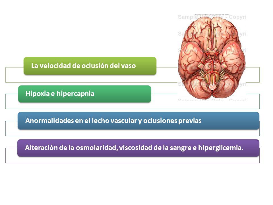 La velocidad de oclusión del vaso Hipoxia e hipercapnia Anormalidades en el lecho vascular y oclusiones previasAlteración de la osmolaridad, viscosida