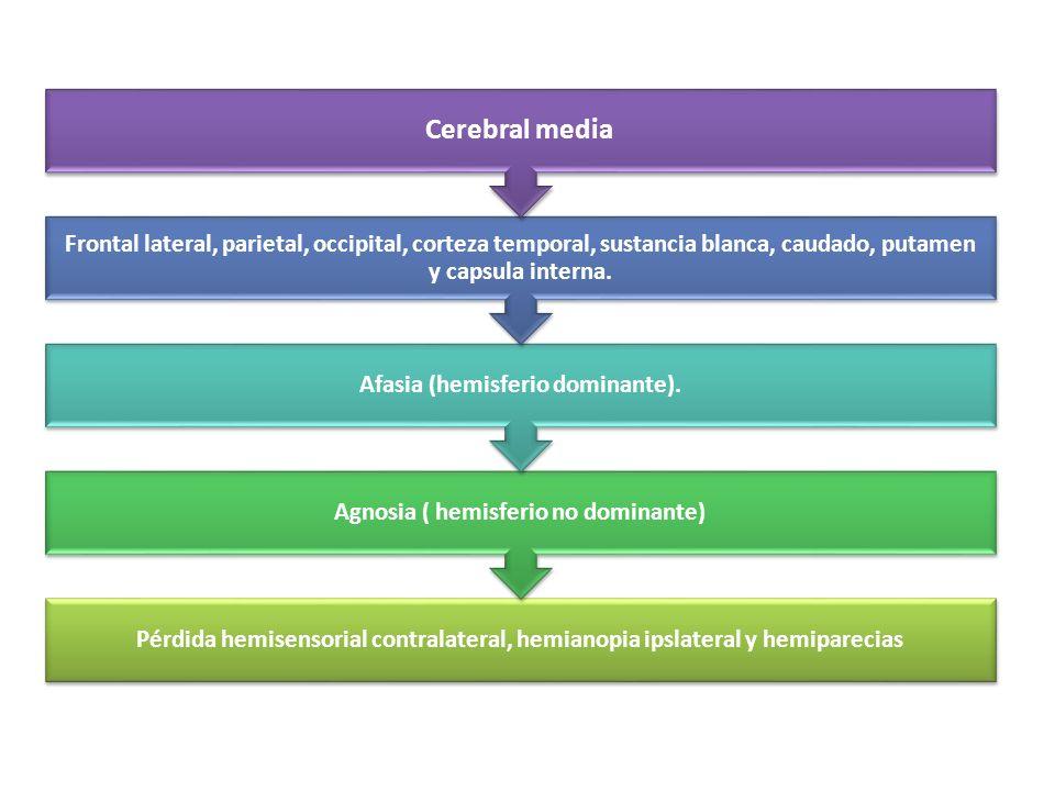 Pérdida hemisensorial contralateral, hemianopia ipslateral y hemiparecias Agnosia ( hemisferio no dominante) Afasia (hemisferio dominante). Frontal la