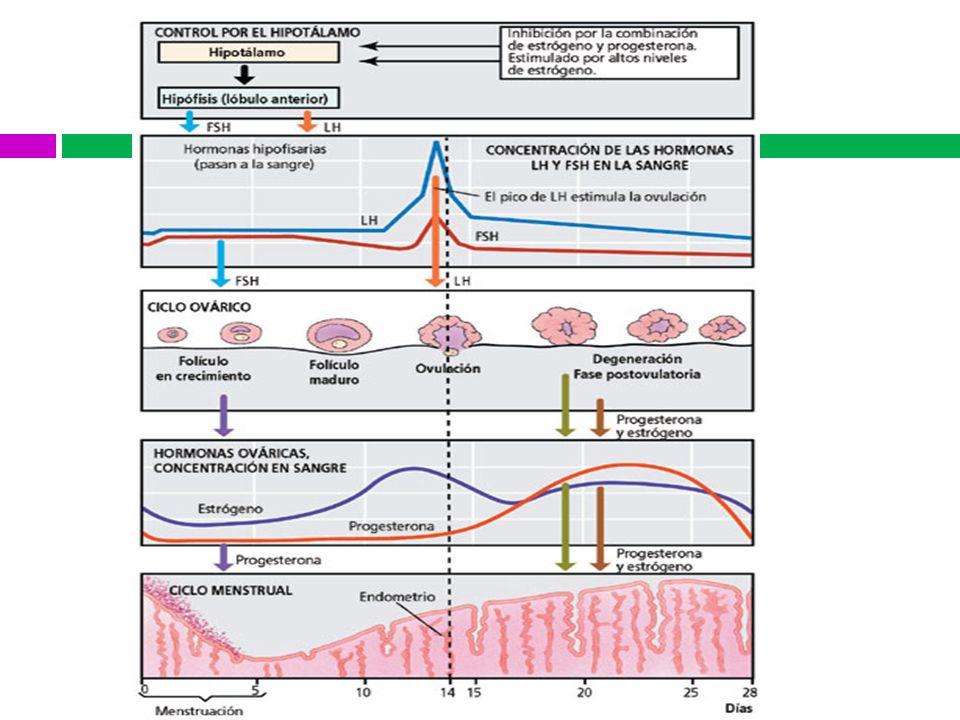 Métodos de diagnóstico Cavidad Uterina Biopsia endometrial Todas las mujeres: Mayor 40 años con SUA Alto riesgo CA endometrial Nulíparas con historia de infertilidad Sangrado irregular abundante de reciente aparición Obesidad (90 kg) Ovarios poliquísticos Historia Familiar CA colon y endometrio Terapia con tamoxifeno Sin mejoría de SUA después de 3m de terapia Aún si la histeroscopía es normal.