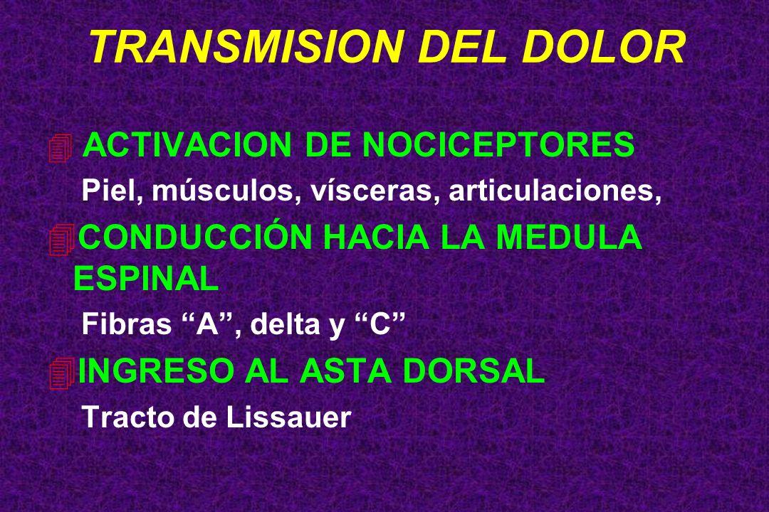 TRANSMISION DEL DOLOR 4 ACTIVACION DE NOCICEPTORES Piel, músculos, vísceras, articulaciones, 4CONDUCCIÓN HACIA LA MEDULA ESPINAL Fibras A, delta y C 4