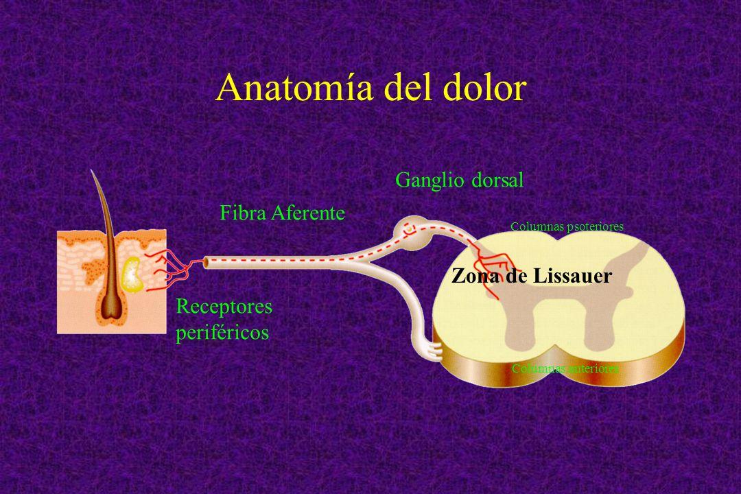 Anatomía del dolor Receptores periféricos Fibra Aferente Ganglio dorsal Columnas psoteriores Zona de Lissauer Columnas anteriores