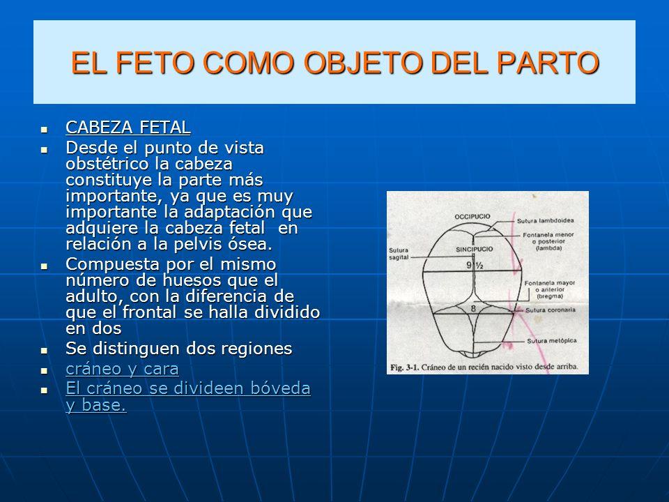 EL FETO COMO OBJETO DEL PARTO CABEZA FETAL CABEZA FETAL Desde el punto de vista obstétrico la cabeza constituye la parte más importante, ya que es muy