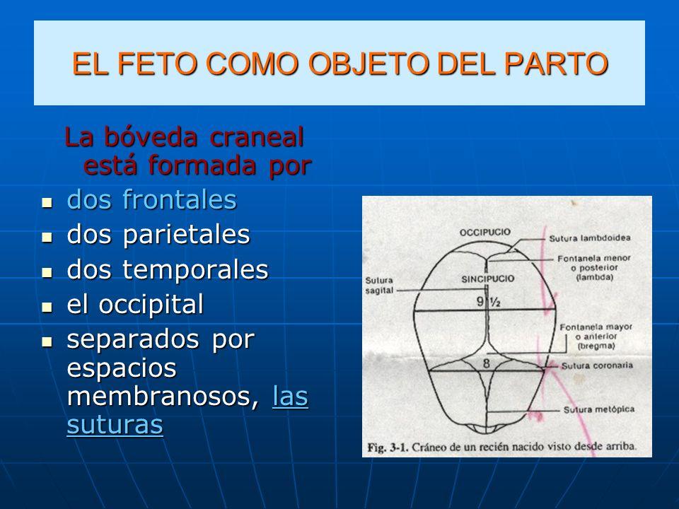 EL FETO COMO OBJETO DEL PARTO La bóveda craneal está formada por dos frontales dos frontales dos parietales dos parietales dos temporales dos temporal