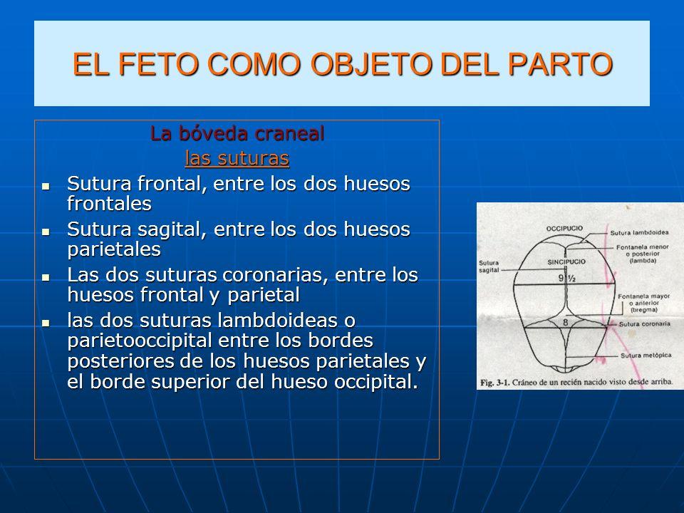 EL FETO COMO OBJETO DEL PARTO La bóveda craneal las suturas Sutura frontal, entre los dos huesos frontales Sutura frontal, entre los dos huesos fronta