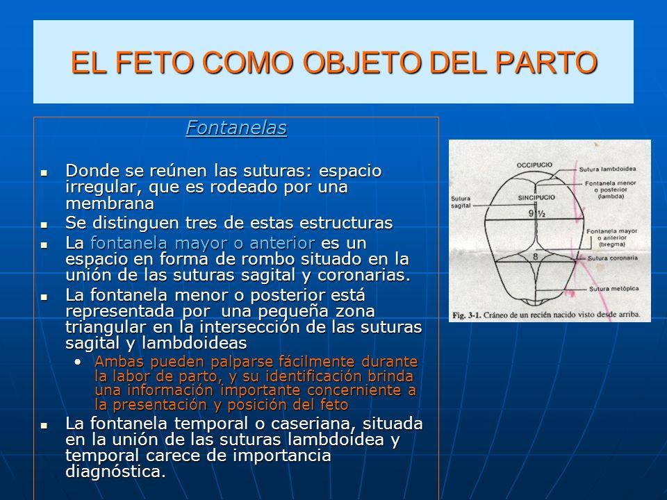 EL FETO COMO OBJETO DEL PARTO Fontanelas Donde se reúnen las suturas: espacio irregular, que es rodeado por una membrana Donde se reúnen las suturas: