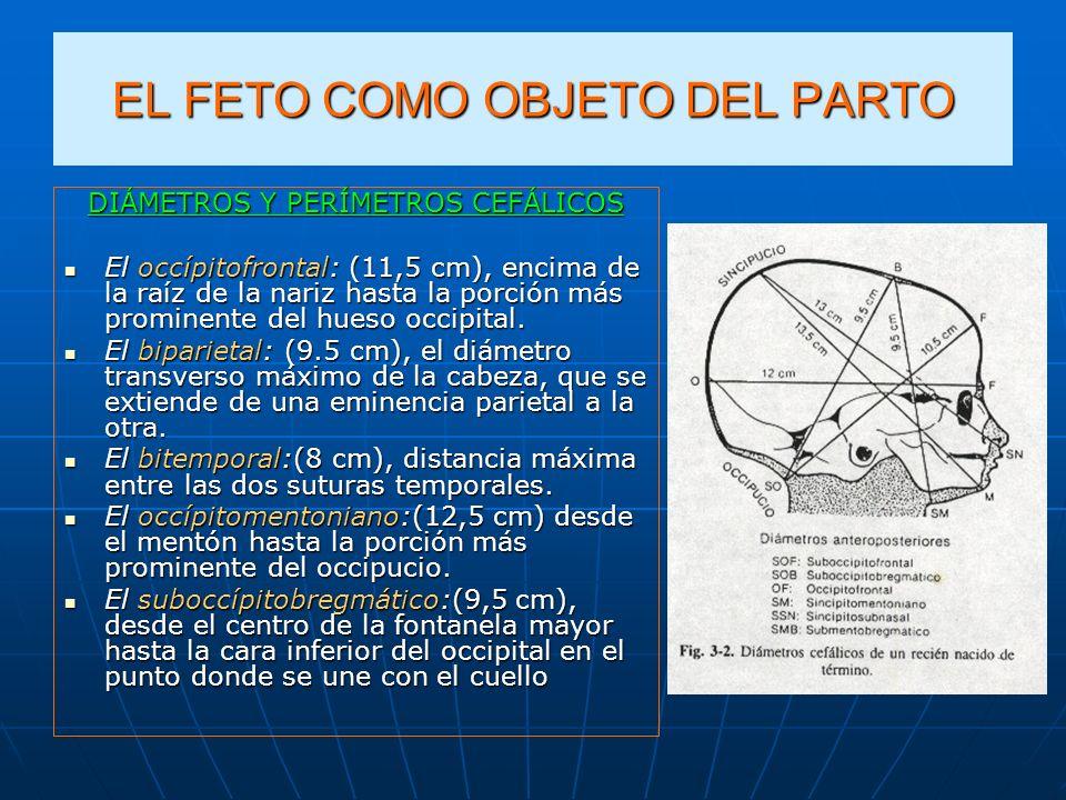 EL FETO COMO OBJETO DEL PARTO DIÁMETROS Y PERÍMETROS CEFÁLICOS El occípitofrontal: (11,5 cm), encima de la raíz de la nariz hasta la porción más promi