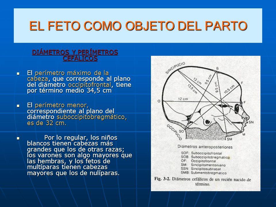 EL FETO COMO OBJETO DEL PARTO DIÁMETROS Y PERÍMETROS CEFÁLICOS El perímetro máximo de la cabeza, que corresponde al plano del diámetro occípitofrontal