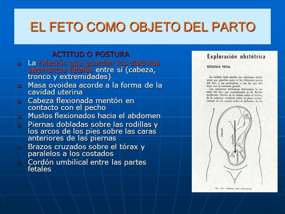 EL FETO COMO OBJETO DEL PARTO ACTITUD O POSTURA La relación que guardan los distintos segmentos fetales entre sí (cabeza, tronco y extremidades) La re
