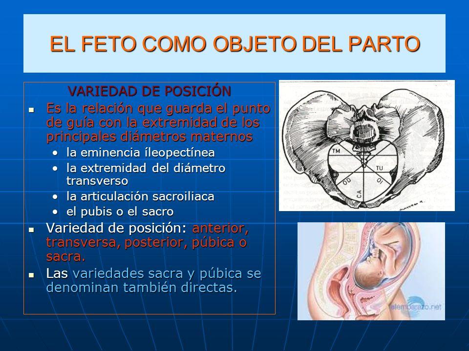 EL FETO COMO OBJETO DEL PARTO VARIEDAD DE POSICIÓN Es la relación que guarda el punto de guía con la extremidad de los principales diámetros maternos