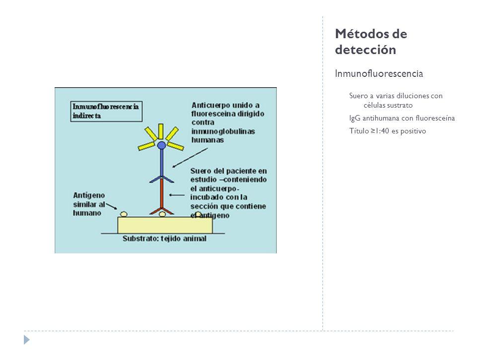 Métodos de detección Inmunofluorescencia Suero a varias diluciones con células sustrato IgG antihumana con fluoresceína Título 1:40 es positivo