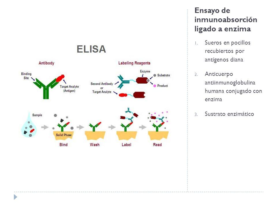 Ensayo de inmunoabsorción ligado a enzima 1. Sueros en pocillos recubiertos por antígenos diana 2. Anticuerpo antiinmunoglobulina humana conjugado con