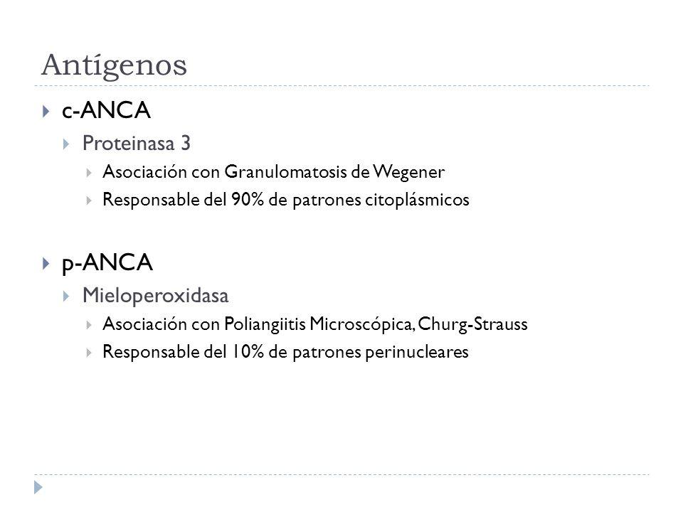 Antígenos c-ANCA Proteinasa 3 Asociación con Granulomatosis de Wegener Responsable del 90% de patrones citoplásmicos p-ANCA Mieloperoxidasa Asociación
