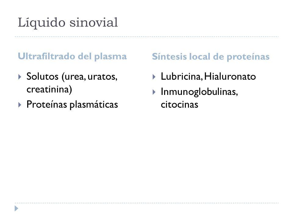 Ultrafiltrado del plasma Síntesis local de proteínas Solutos (urea, uratos, creatinina) Proteínas plasmáticas Lubricina, Hialuronato Inmunoglobulinas,