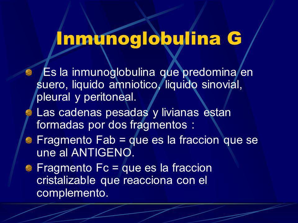 Inmunoglobulina G Es la inmunoglobulina que predomina en suero, liquido amniotico, liquido sinovial, pleural y peritoneal. Las cadenas pesadas y livia
