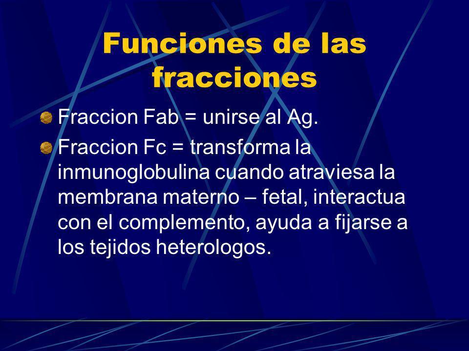 Funciones de las fracciones Fraccion Fab = unirse al Ag. Fraccion Fc = transforma la inmunoglobulina cuando atraviesa la membrana materno – fetal, int