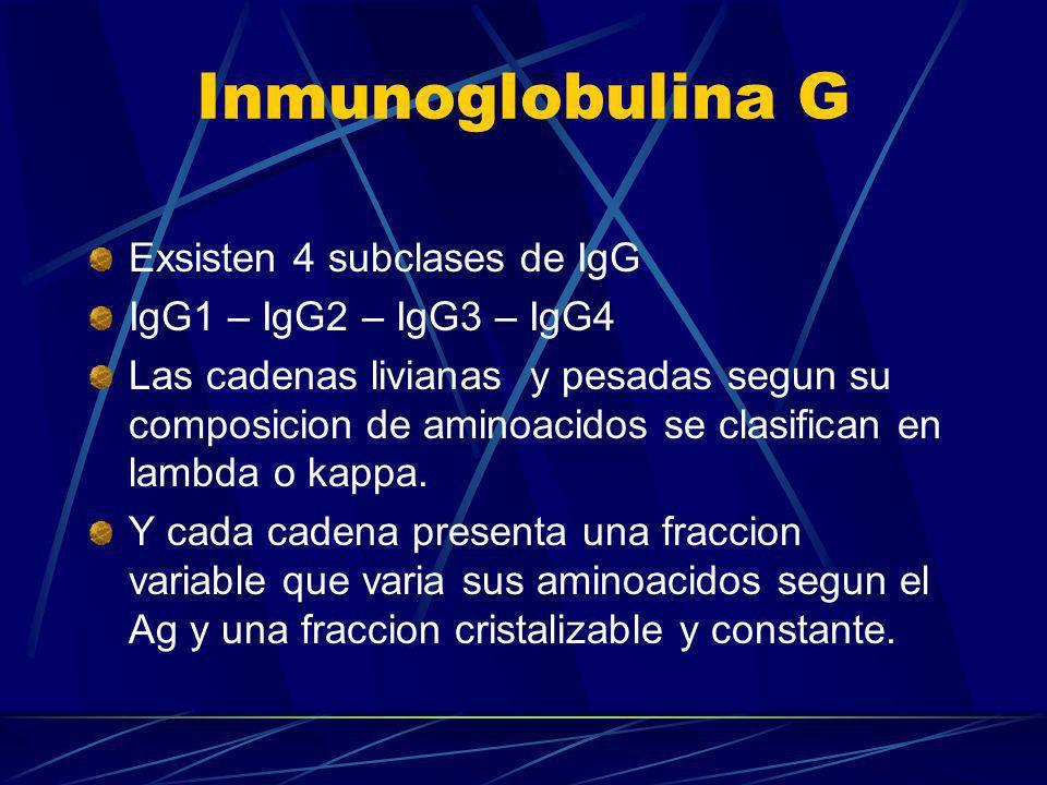 Inmunoglobulina G Exsisten 4 subclases de IgG IgG1 – IgG2 – IgG3 – IgG4 Las cadenas livianas y pesadas segun su composicion de aminoacidos se clasific