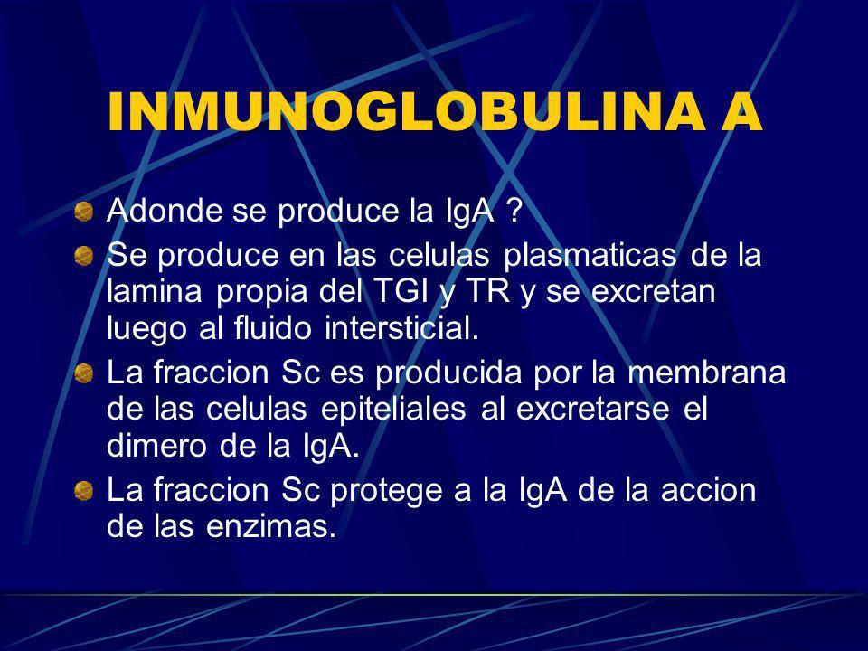 INMUNOGLOBULINA A Adonde se produce la IgA ? Se produce en las celulas plasmaticas de la lamina propia del TGI y TR y se excretan luego al fluido inte