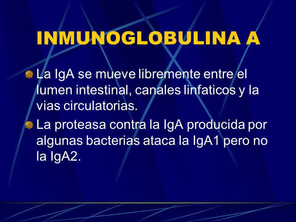 INMUNOGLOBULINA A La IgA se mueve libremente entre el lumen intestinal, canales linfaticos y la vias circulatorias. La proteasa contra la IgA producid