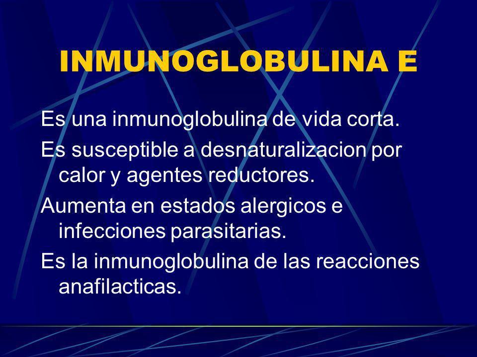 INMUNOGLOBULINA E Es una inmunoglobulina de vida corta. Es susceptible a desnaturalizacion por calor y agentes reductores. Aumenta en estados alergico