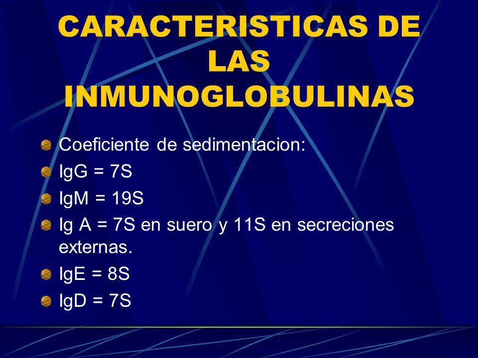 CARACTERISTICAS DE LAS INMUNOGLOBULINAS Coeficiente de sedimentacion: IgG = 7S IgM = 19S Ig A = 7S en suero y 11S en secreciones externas. IgE = 8S Ig