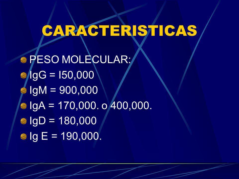 CARACTERISTICAS PESO MOLECULAR: IgG = I50,000 IgM = 900,000 IgA = 170,000. o 400,000. IgD = 180,000 Ig E = 190,000.