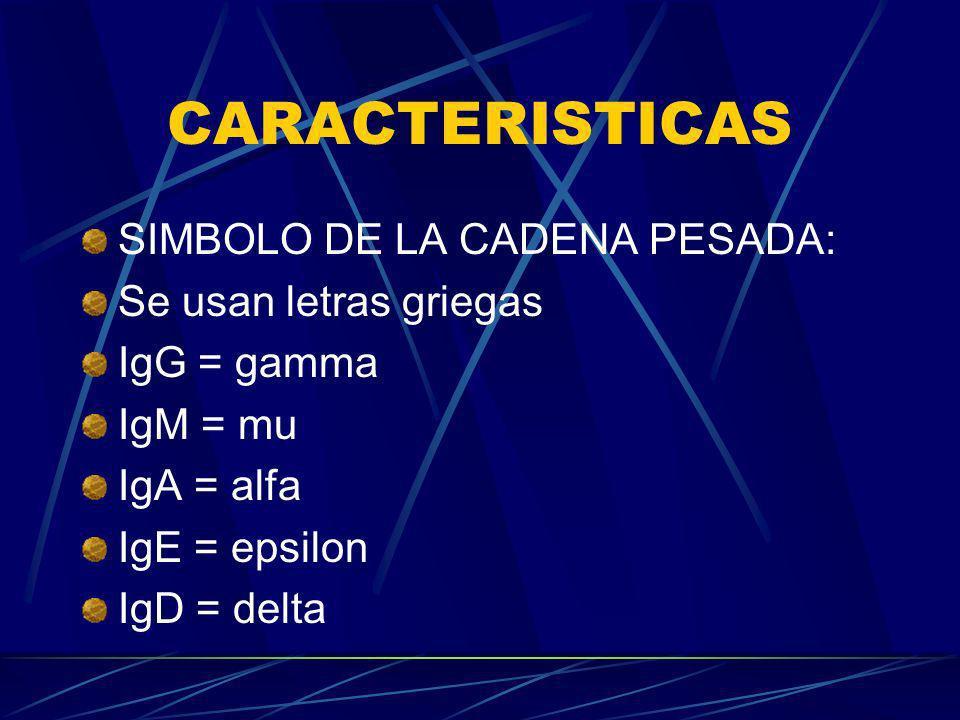 CARACTERISTICAS SIMBOLO DE LA CADENA PESADA: Se usan letras griegas IgG = gamma IgM = mu IgA = alfa IgE = epsilon IgD = delta