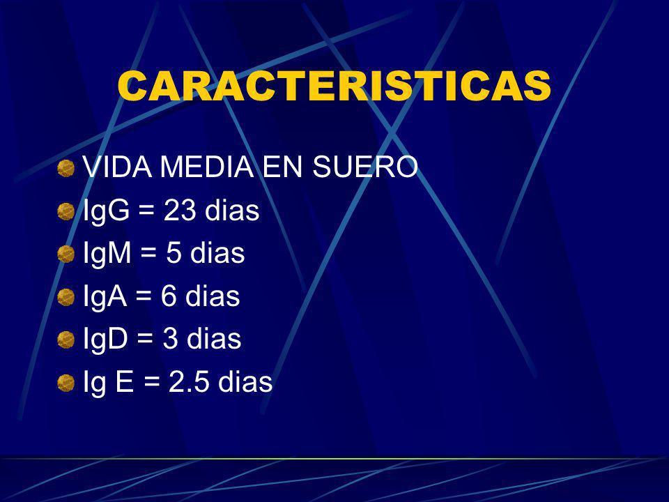 CARACTERISTICAS VIDA MEDIA EN SUERO IgG = 23 dias IgM = 5 dias IgA = 6 dias IgD = 3 dias Ig E = 2.5 dias