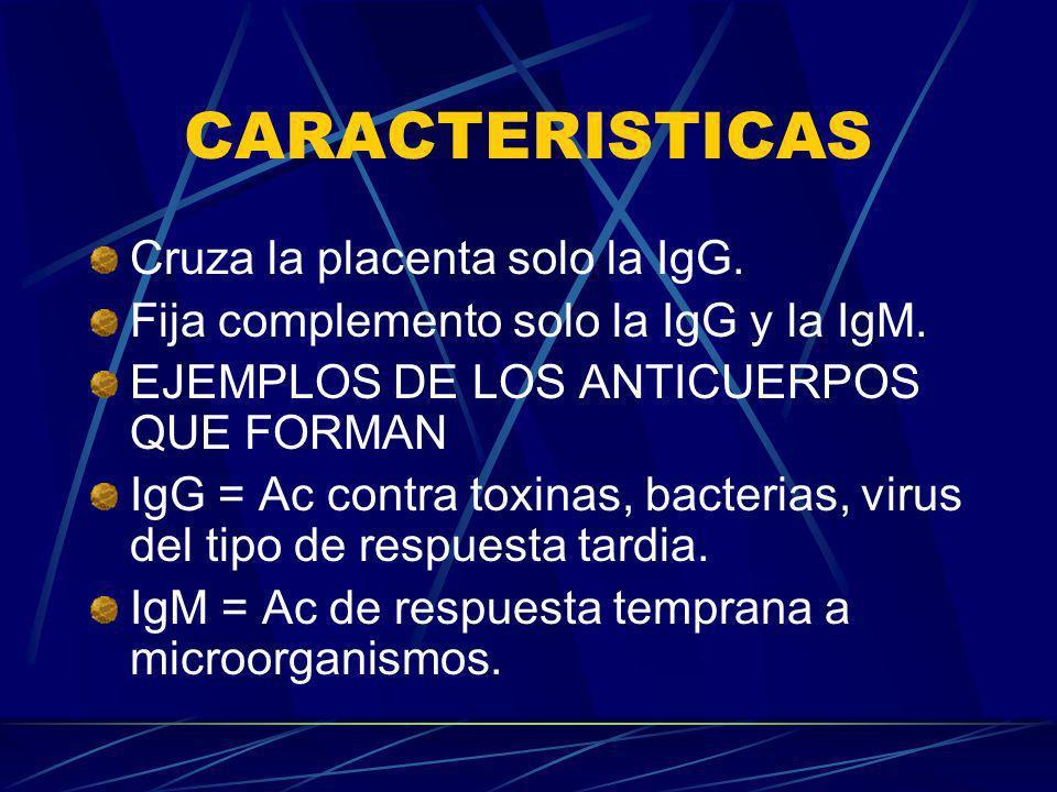 CARACTERISTICAS Cruza la placenta solo la IgG. Fija complemento solo la IgG y la IgM. EJEMPLOS DE LOS ANTICUERPOS QUE FORMAN IgG = Ac contra toxinas,