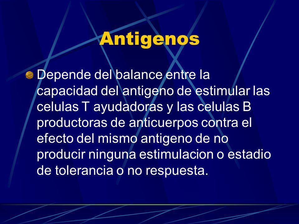 Antigenos Depende del balance entre la capacidad del antigeno de estimular las celulas T ayudadoras y las celulas B productoras de anticuerpos contra
