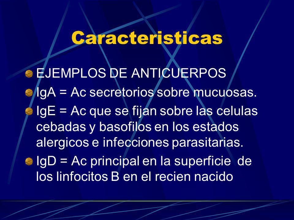 Caracteristicas EJEMPLOS DE ANTICUERPOS IgA = Ac secretorios sobre mucuosas. IgE = Ac que se fijan sobre las celulas cebadas y basofilos en los estado