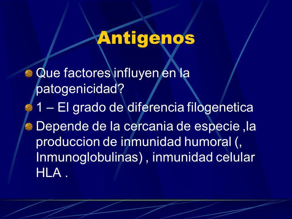 Antigenos Que factores influyen en la patogenicidad? 1 – El grado de diferencia filogenetica Depende de la cercania de especie,la produccion de inmuni