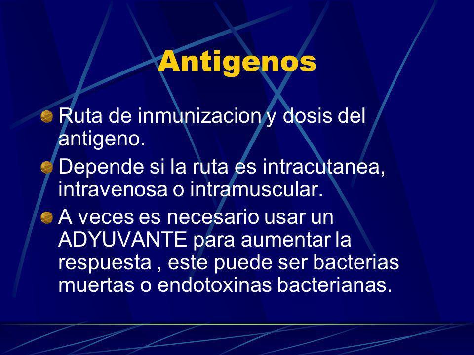 Antigenos Ruta de inmunizacion y dosis del antigeno. Depende si la ruta es intracutanea, intravenosa o intramuscular. A veces es necesario usar un ADY
